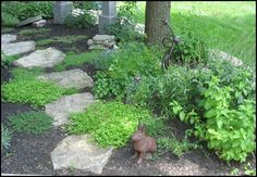 I'd love to find some nice slate to make a path and have the Corsican Mint and Creeping Thyme fill in around it