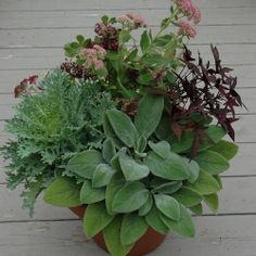 Large Terra Cotta Pot Container Garden with Lamb's Ear, Flowering Kale, and Sweet Potato Vine