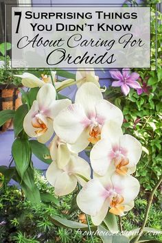 These tips for growing orchids are the BEST! I always thought orchids were difficult to grow. Now that I know they're not, I'll be buying some for house plants. Orchids In Water, Indoor Orchids, Orchids Garden, Garden Plants, House Plants, Potted Plants, Indoor Plants, Flowers Garden, Potted Geraniums