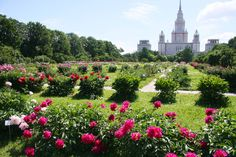 Botanical Garden of Moscow State University - the oldest botanical research institution in Russia, pledged in 1706 by decree of Peter I  #friendlylocalguides #moscowtours #toursofmoscow #privatetoursmoscow #moscowgarden #moscowbotanicalgarden #moscowparks