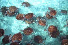 turtles image by mackyJ23 - Photobucket
