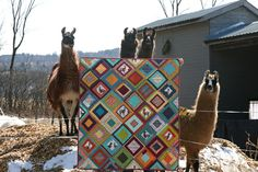 Llama quilt! Best quilt models, ever!
