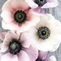 Happy Sunday! Gorgeous florals from @emilyquinton