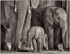 Welcome to the World by Laurie Rubin on 500px