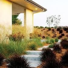 fountain grass and flowers