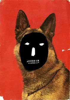 What I see when I look at a German Shepard.