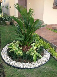 Eu quero esse tbm!!!!perfeito Small Garden With Pebbles, Nice Small Garden Ideas, White Pebble Garden, White Pebbles, Back Garden Ideas, Landscaping With Palm Trees, Front Landscaping Ideas, Landscaping Design, Garden Landscaping