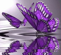 Image detail for -Exotic Butterfly Wall Murals