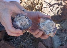 Geodes - Where can you find geodes? - DesertUSA
