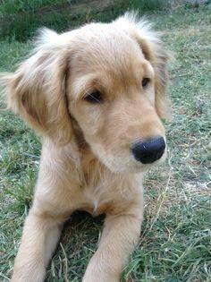 Adorable Golden baby