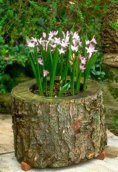 32 Alternativas Naturais Para Hortas, Plantas e Vasos Utilizando Madeira e Troncos de Árvore