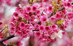 Imagenes bonitas de flores