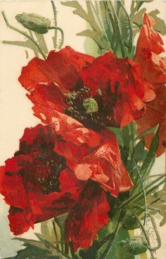 Catherine Klein=poppies in red Catherine Klein, Art Floral, Watercolor Flowers, Watercolor Paintings, Poster Mural, Illustration, China Painting, Flower Pictures, Red Poppies
