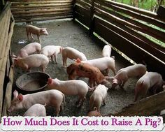 How to build a natural farming deep bed pig sty farm for How much does it cost to build a farmhouse