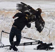 30 Scènes Féeriques que vivent vraiment les Photographes Animaliers - page 5