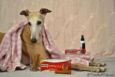 Look it's Spa Day! -- Treats to Improve Your Dog's Smile - Tales and Tails #MilkBone