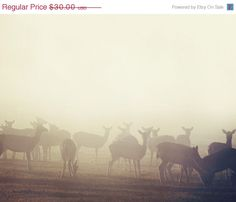 SALE Deer Photograph, Nature Photography -  Fog, Animals, Autumn, Fall, Minimal, Rustic, For Him, Brown,  Neutral - In Between Dreams. $25.50, via Etsy.