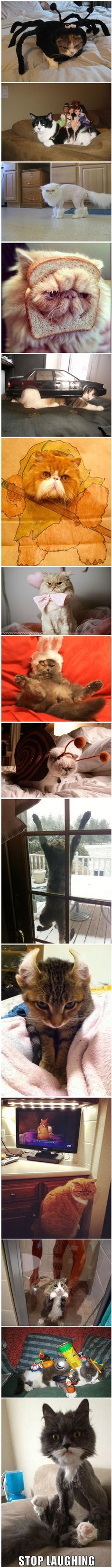 Cats That Really Deserve An Apology (15 pics)