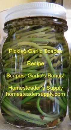Pickled garlic scape recipe