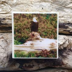 Regal Bald Eagle Oregon Coast Handmade Tile Coaster Sand Beach Sea Grass Pacific Northwest Outdoor Nature Photography Gifts Coastal Decor by LeftCoastOriginals on Etsy