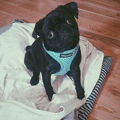 Zoella's dog Nala is sooooo cute