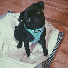 Zoella's dog Nala is sooooo cute
