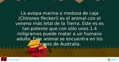 La avispa marina o medusa de caja (Chironex fleckeri) es el animal con el veneno más letal de la Tierra. Este es es tan potente que con sólo unos 1.4 miligramos puede matar a un humano adulto. Este animal se encuentra en los mares de Australia. #Naturaleza #aver