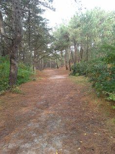 Genoeg ruimte om uren te wandelen in de Schoorlse bossen