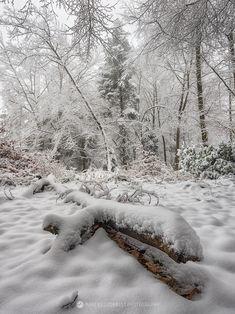 Swiss winter landscape. Near Basel, Switzerland.