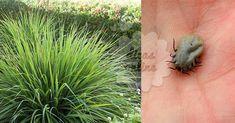 Exterminador natural acaba de vez com carrapatos e pulgas! Mata Mosquito, Pet Dogs, Dog Cat, Lhasa Apso, Love Pet, Ticks, Pet Shop, Shih Tzu, Fleas