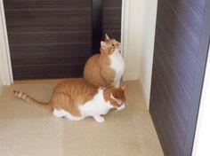 ブログ更新出待ちする猫たち 二匹の猫と徒然なるままに