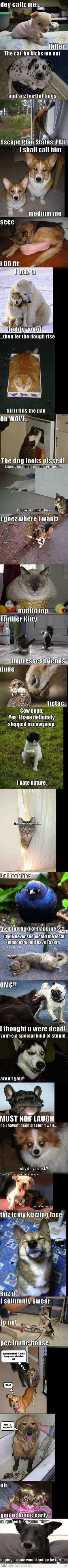 The Best Of Animal Memes -Yep, I totally was laughing out loud.