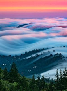 "coiour-my-world: """"Candyland""- Mt.Tamalpais State Park, CA ~ Steinberg Nicholas """