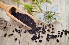 This humble, but immensely powerful seed, kills MRSA, heals the chemical weapon poisoned body, stimulates regeneration of the dying beta cells within the diabetic's pancreas, and yet too few even know it exists. The seeds of the annual flowering plant, Nigella Sativa, have been prized for their healing properties since...More