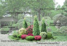 Композиция из хвойных растений кругового обзора в Самаре - Berso Small Garden Landscape, Small Yard Landscaping, Privacy Landscaping, Creative Landscape, Landscape Design Plans, Conifer Plants, Front Yard Plants, Evergreen Garden, Vegetable Garden Design