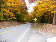 Flatwoods near Russel Hill,TN