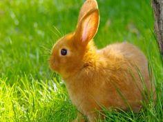 Un lindo conejo sobre la hierba