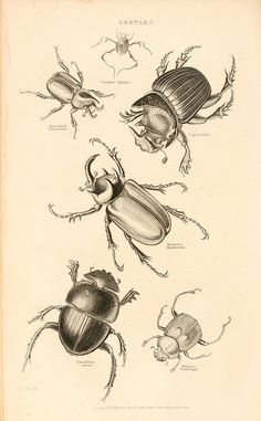 bugs Más