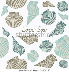 Vector card with Sea Shells