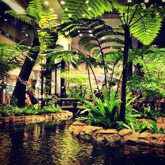 Singapore Airport. สวนเฟิร์น