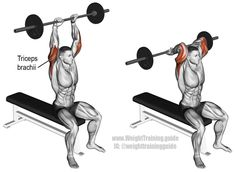 Isolate and build your triceps brachii with the overhead barbell triceps extension, which can be performed either seated or standing. Fitness Workouts, Fitness Gym, Sport Fitness, Muscle Fitness, Corps Fitness, Bicep And Tricep Workout, Fitness Studio Training, Workout For Flat Stomach, Chest Workouts