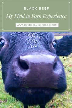 Field to Fork - The Whole Animal. If you are interesting in the process of raising an animal from the start to the end this is an interesting insight. My journey with Gus - Our Dexter Steer.