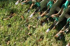"""Lawn aeration is the best kept secret in making your lawn healthy. Aeration involves making holes (cores) in the lawn by extracting a plug of soil utilizing an aeration machine. In order to establish a healthy lawn we need three things; oxygen, nutrients, and water. The roots must be able to """"breathe"""", this means allowing oxygen to get to the root system Aeration - Greenscapes Madison, Wi - ,97…"""