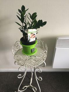 Plant Catalogs, Indoor Plants, House Plants, My House, Planter Pots, Inside Plants, Home Plants, Houseplants, Indoor House Plants