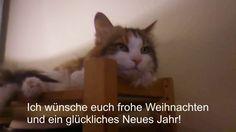 My Talking Cat Nikki: Merry Christmas! (meine sprechende Katze Nikki: Fr...