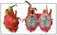 Dragon fruit, Hylocereus undatus, STRAWBERRY PEAR, Huo long guo : Philippine Medicinal Herbs / Alternative Medicine