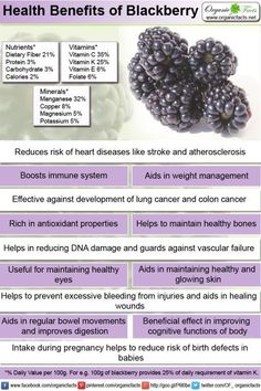Health benefits of blackberry include better digestive health, strengthened immune defense, healthy functioning of heart, prevention of cancer and relief from endothelial dysfunction. Blackberry provides cognitive benefits and aids in enhancing memory, weight management, keeping the bones strong, healthy skin, improved vision and disease-free eyes, normal blood clotting and may also serve as a valuable food during pregnancy owing to an impressive gamut of healthful nutrients.