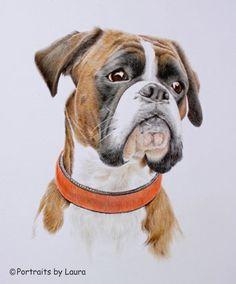 family of boxer dogs hd family of boxer dogs wallpaper boxers