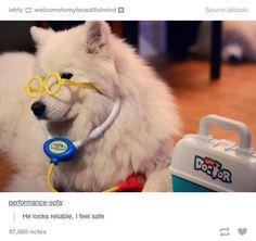 safe dog doctor - Google Search