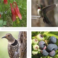 thisoldhouse.com   from Plants for Backyard Birds
